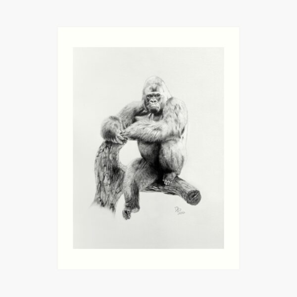 Gorilla, 2012, Pencil Art Print