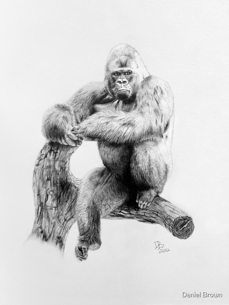 Gorilla, 2012, Pencil by Daniel Brown