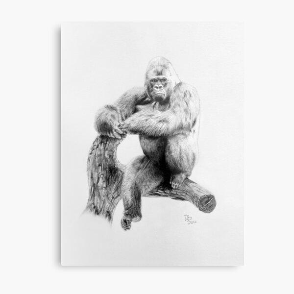 Gorilla, 2012, Pencil Metal Print