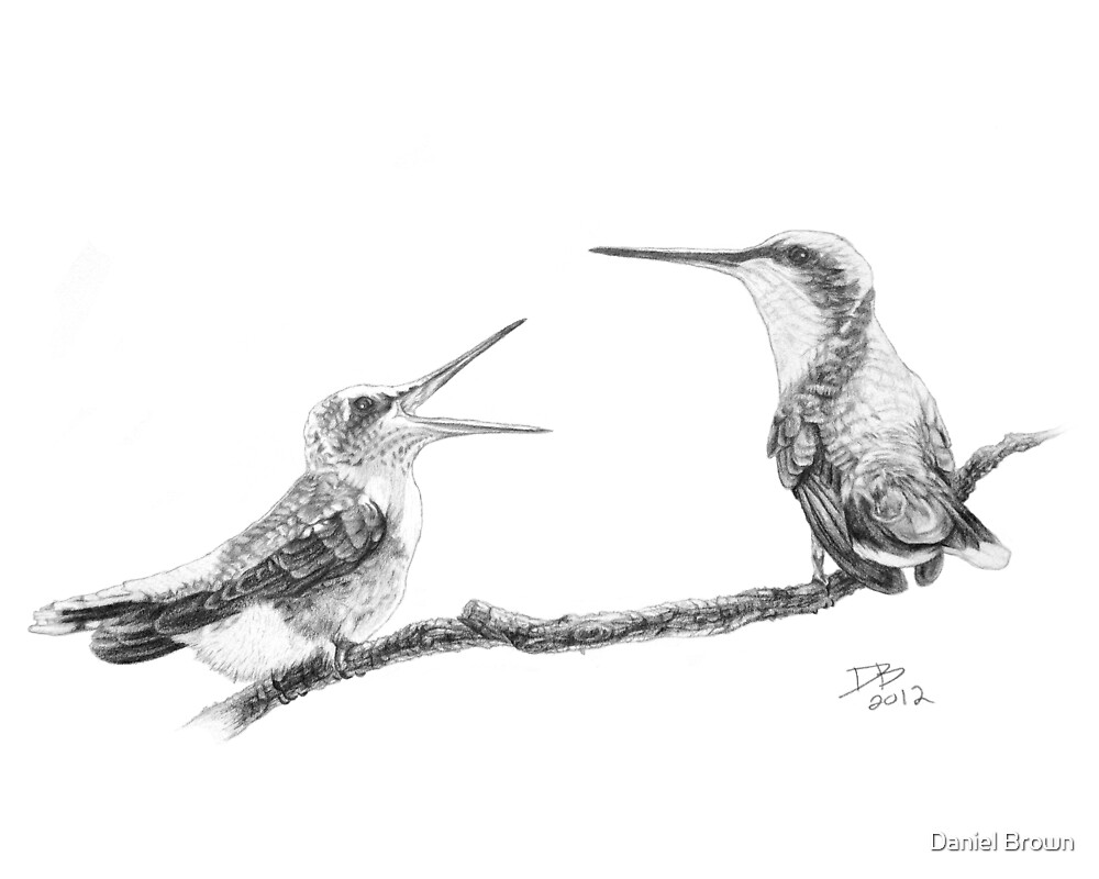 Ruby-Throated Hummingbird: Mother and Chick, 2012, Pencil by Daniel Brown