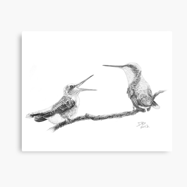 Ruby-Throated Hummingbird: Mother and Chick, 2012, Pencil Metal Print