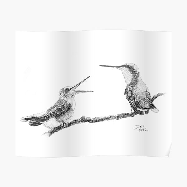 Ruby-Throated Hummingbird: Mother and Chick, 2012, Pencil Poster