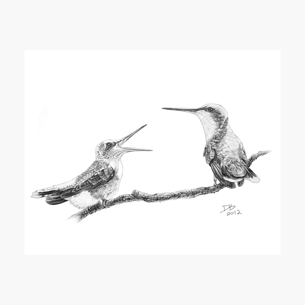 Ruby-Throated Hummingbird: Mother and Chick, 2012, Pencil Photographic Print