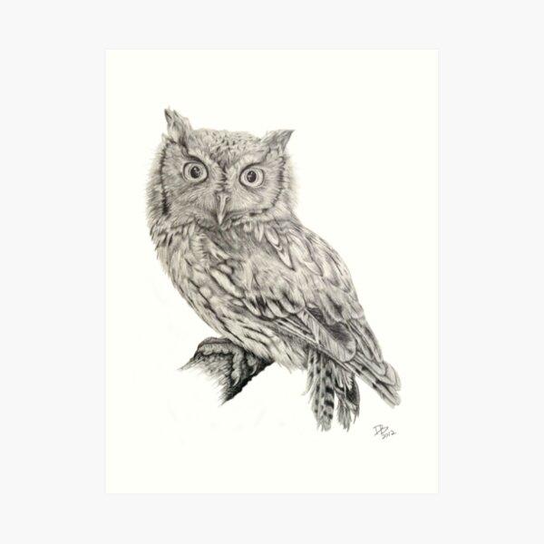 Eastern Screech Owl (Megascops asio), 2012, Pencil Art Print