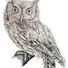 Eastern Screech Owl (Megascops asio), 2012, Pencil by Daniel Brown