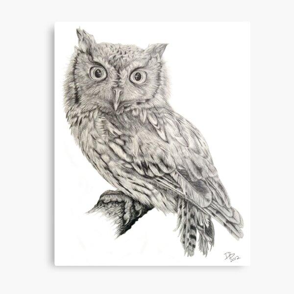 Eastern Screech Owl (Megascops asio), 2012, Pencil Metal Print