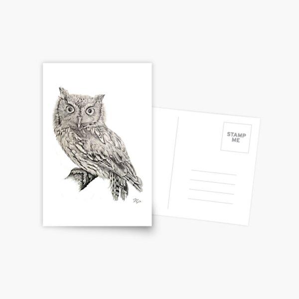 Eastern Screech Owl (Megascops asio), 2012, Pencil Postcard