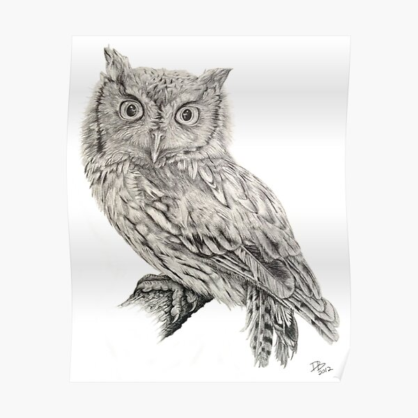 Eastern Screech Owl (Megascops asio), 2012, Pencil Poster