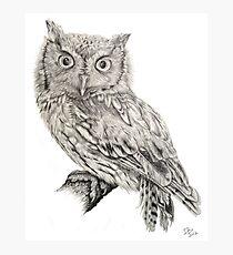 Eastern Screech Owl (Megascops asio), 2012, Pencil Photographic Print