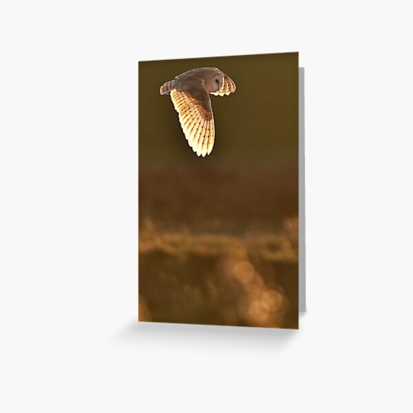 Barn Owl - Hunting over the Marshes Greeting Card