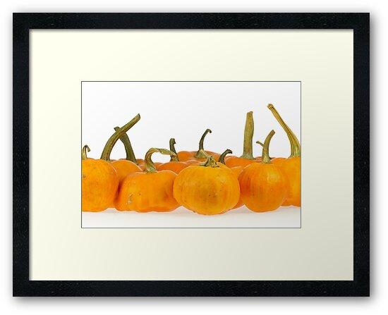 Orange pumpkin by Proobjektyva
