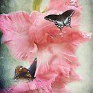 Glad Butterflies by vigor