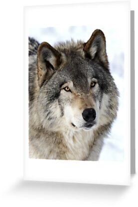 Timber Wolf by Jim Cumming