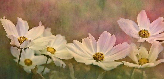 Wildflowers von jules572