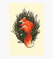 Fox in the Brush Photographic Print