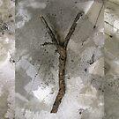 sticks on the ground by evon ski