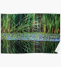 Splitting Reeds Poster