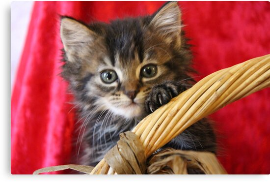 Playful Kitten by andreae2