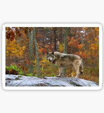 Timber Wolf Sticker