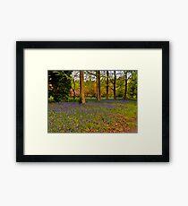 Down in Bluebell Wood Framed Print