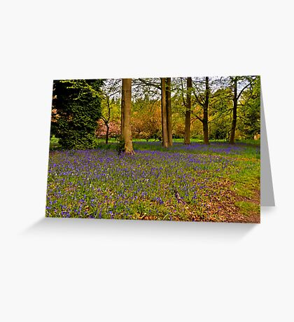 Down in Bluebell Wood Greeting Card