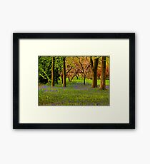 Spring in the Woods Framed Print