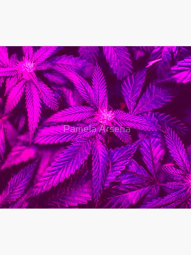Psychedelic Cannabis Pink Marijuana Leaves  by xpressio