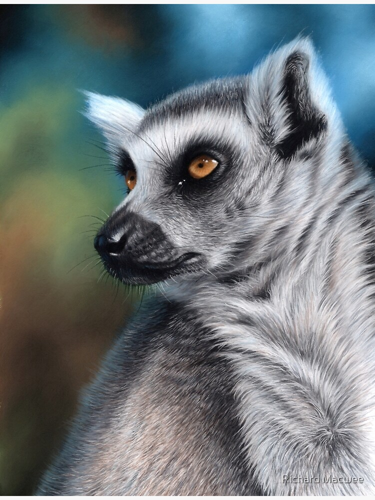 Wildlife artwork of a Lemur by richardmacwee