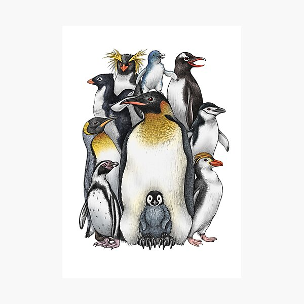 Penguin Obsession Photographic Print