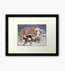 Dream Has Puppies Framed Print