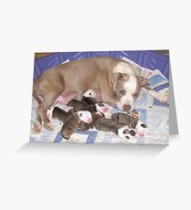 Dream Has Puppies Greeting Card