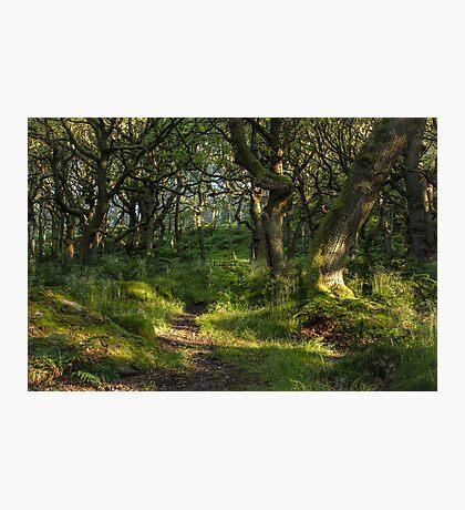 Padley Woods Photographic Print