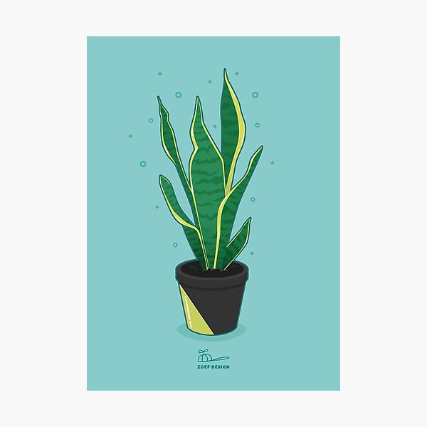 snake plant Photographic Print