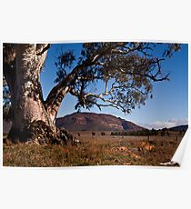 River Red Gum Poster