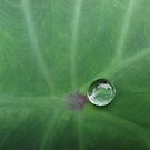 Droplet by nellie11