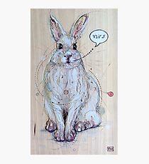Snow Bunny Photographic Print