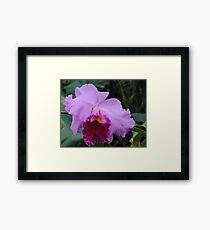 The Wonder of an Orchid Framed Print