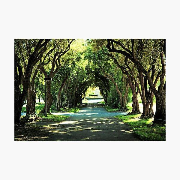 Ohlone College Walkway Photographic Print