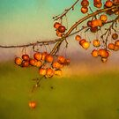 Fall's Crab-apples by jules572