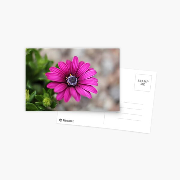 Colourful pink flowers Postcard