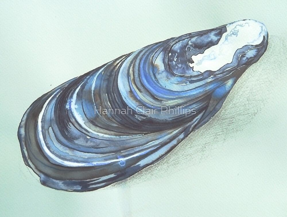 beautiful blue mussel by Hannah Clair Phillips