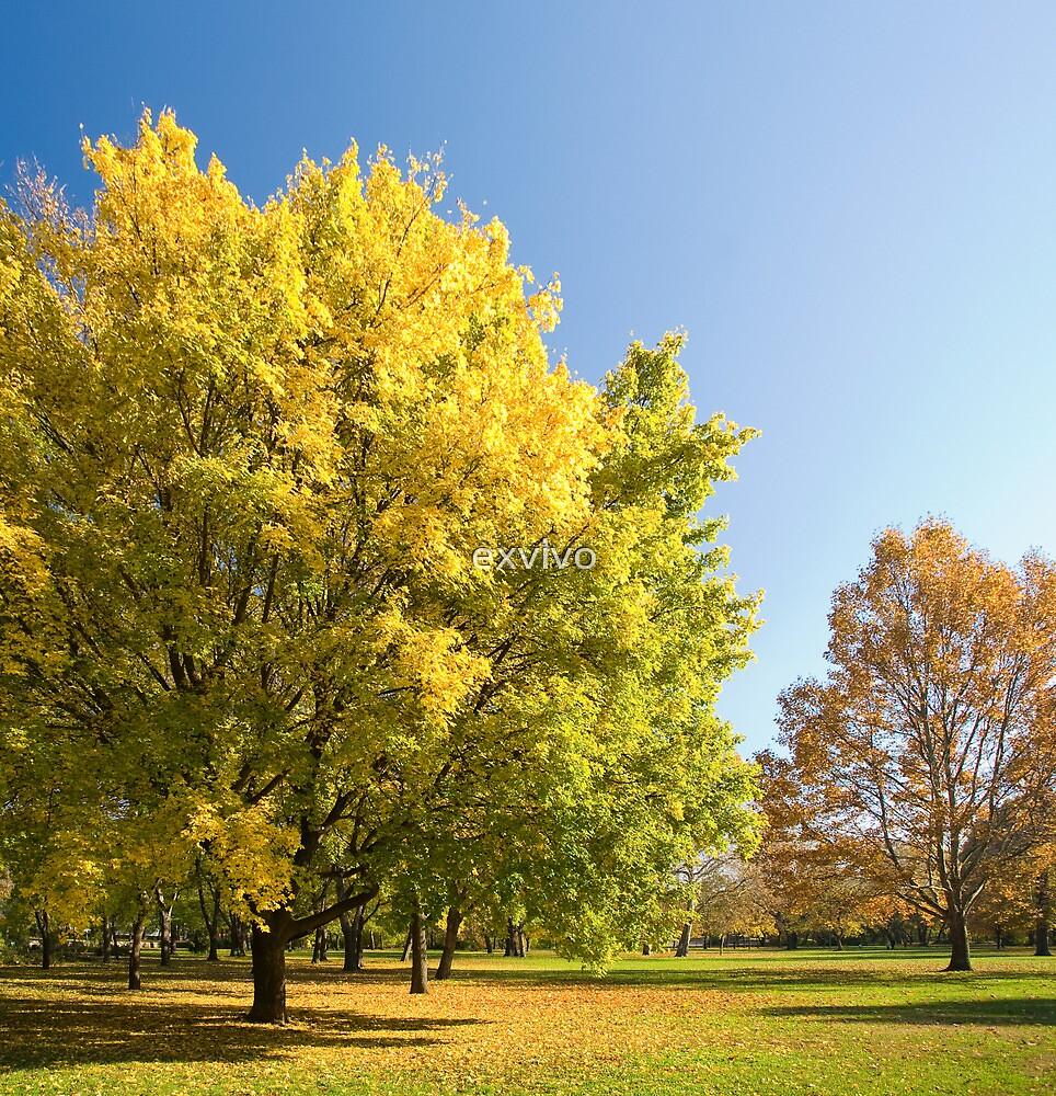 Autumn serenity. by exvivo