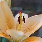 Lily 2012 by karenkirkham