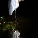 Great White Egret In the Marsh by Paulette1021