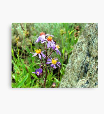 Mountain Wild Flower Canvas Print