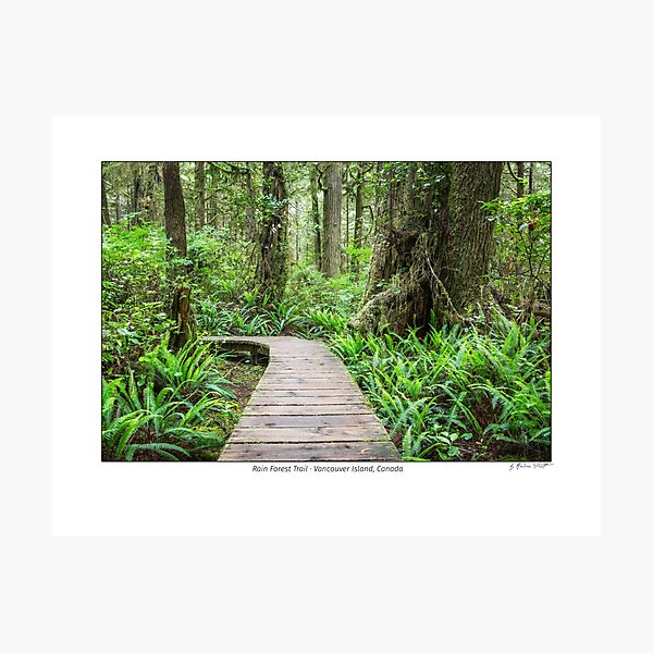 Rain forest trail, Vancouver Island, Canada Photographic Print