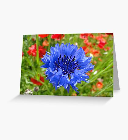 Blue Amongst The Reds Greeting Card