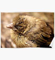 Petit oiseau Poster