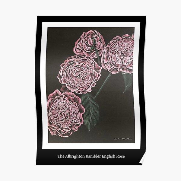Albrighton Rambler English Rose Poster