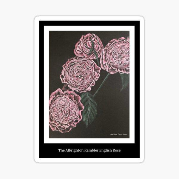 Albrighton Rambler English Rose Sticker
